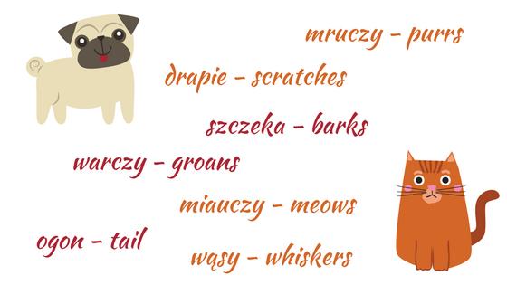 pets in Polish