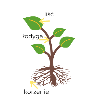 [A2] Rośliny doniczkowe / Indoor plants